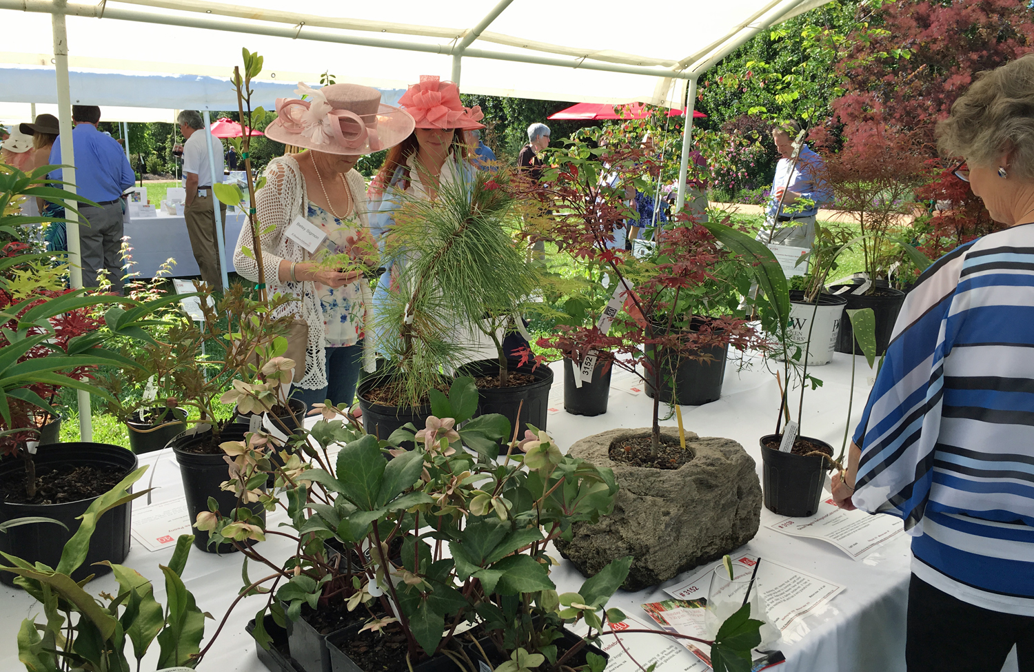 Fancy hats and beautiful plants were on display. The auction, which included plants and other items, raises funds for the arboretum.