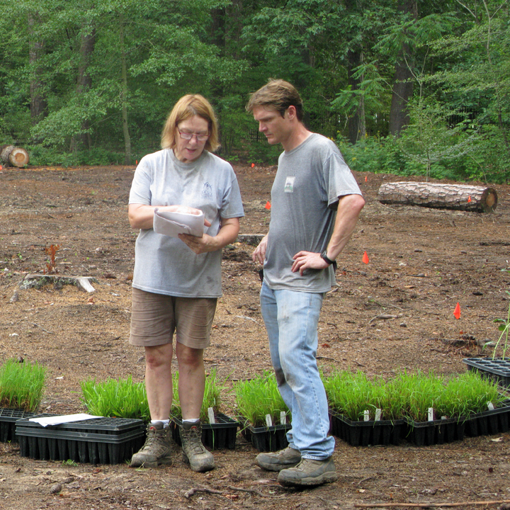 Growing a Piedmont Prairie