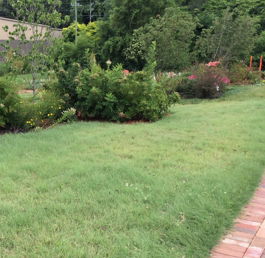 A Different Lawn With Buffalo Grass A New Lawn Alternative