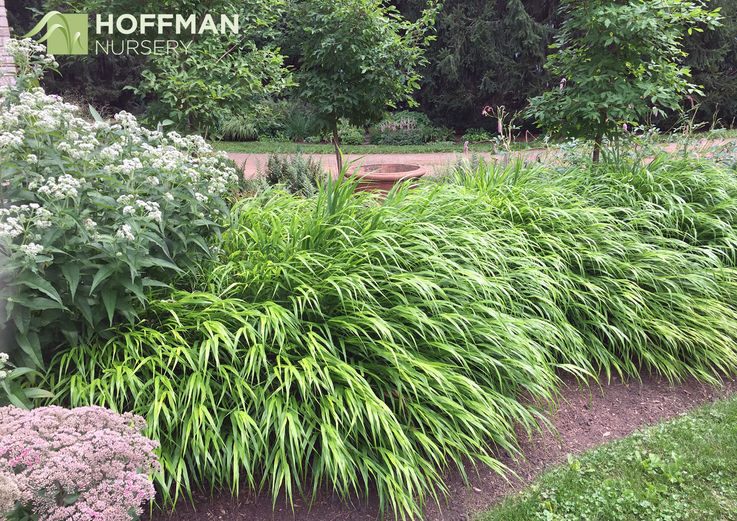 Hakonechloa macra creates a lush cascade of foliage in this planting in front of the Carmichiel-Kelley home.