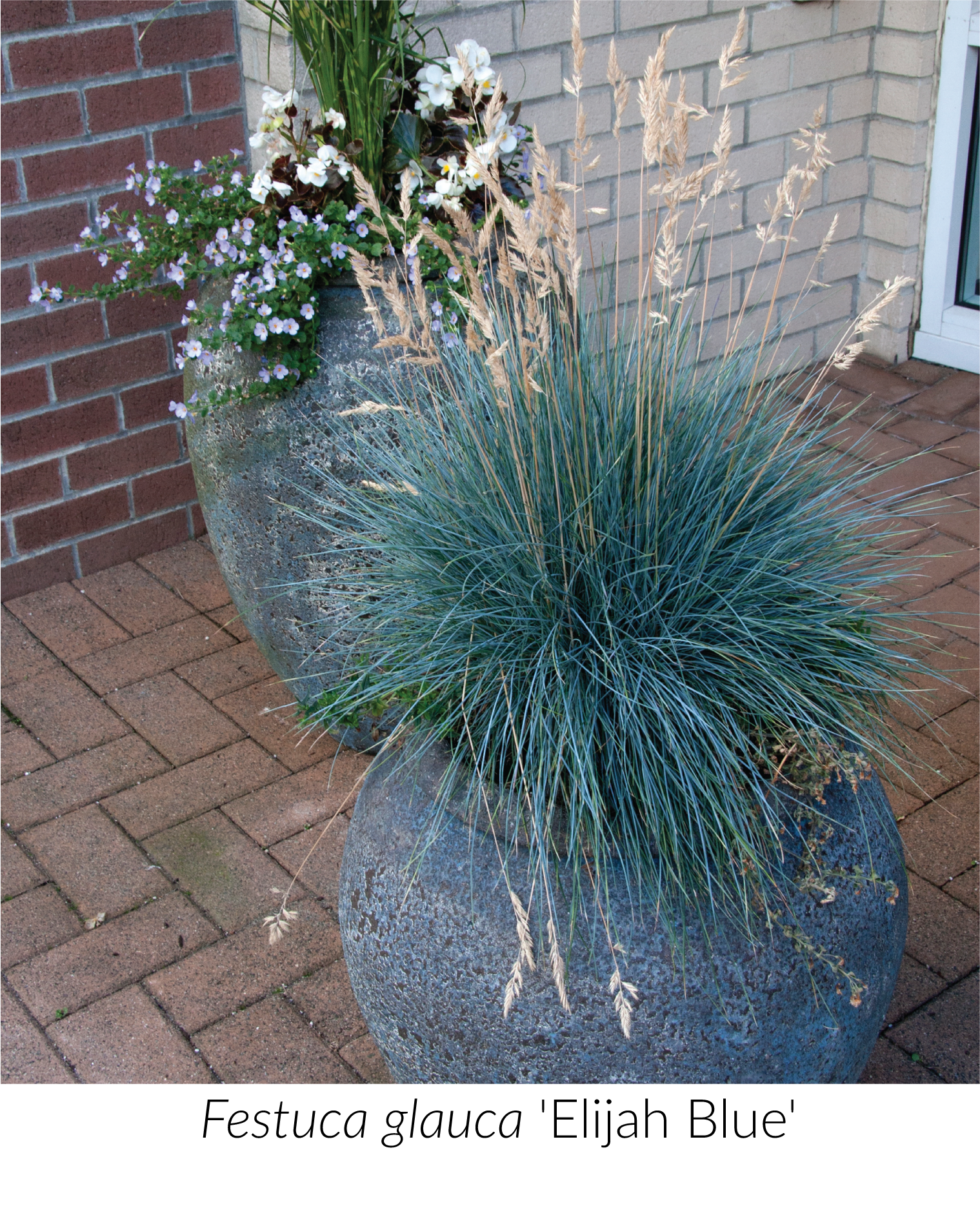 Unexpected Grasses for Containers