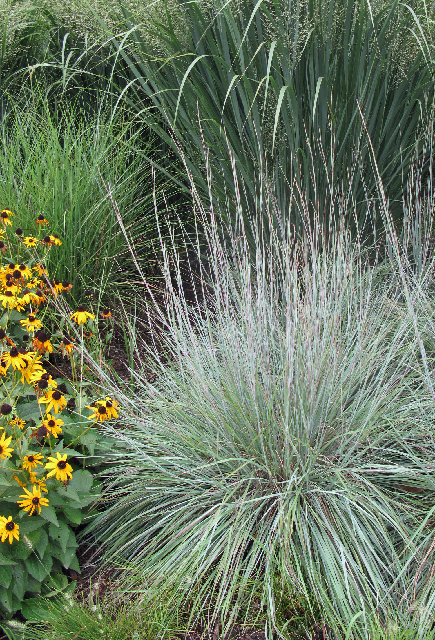 Tips For Growing Grasses And Grass Maintnenance