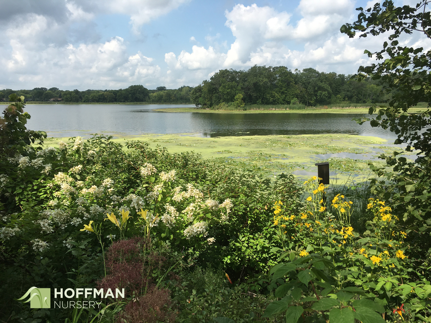The lakes in Minnesota offer beautiful views and opportunities for gardeners to help keep the lakes clean and healthy.