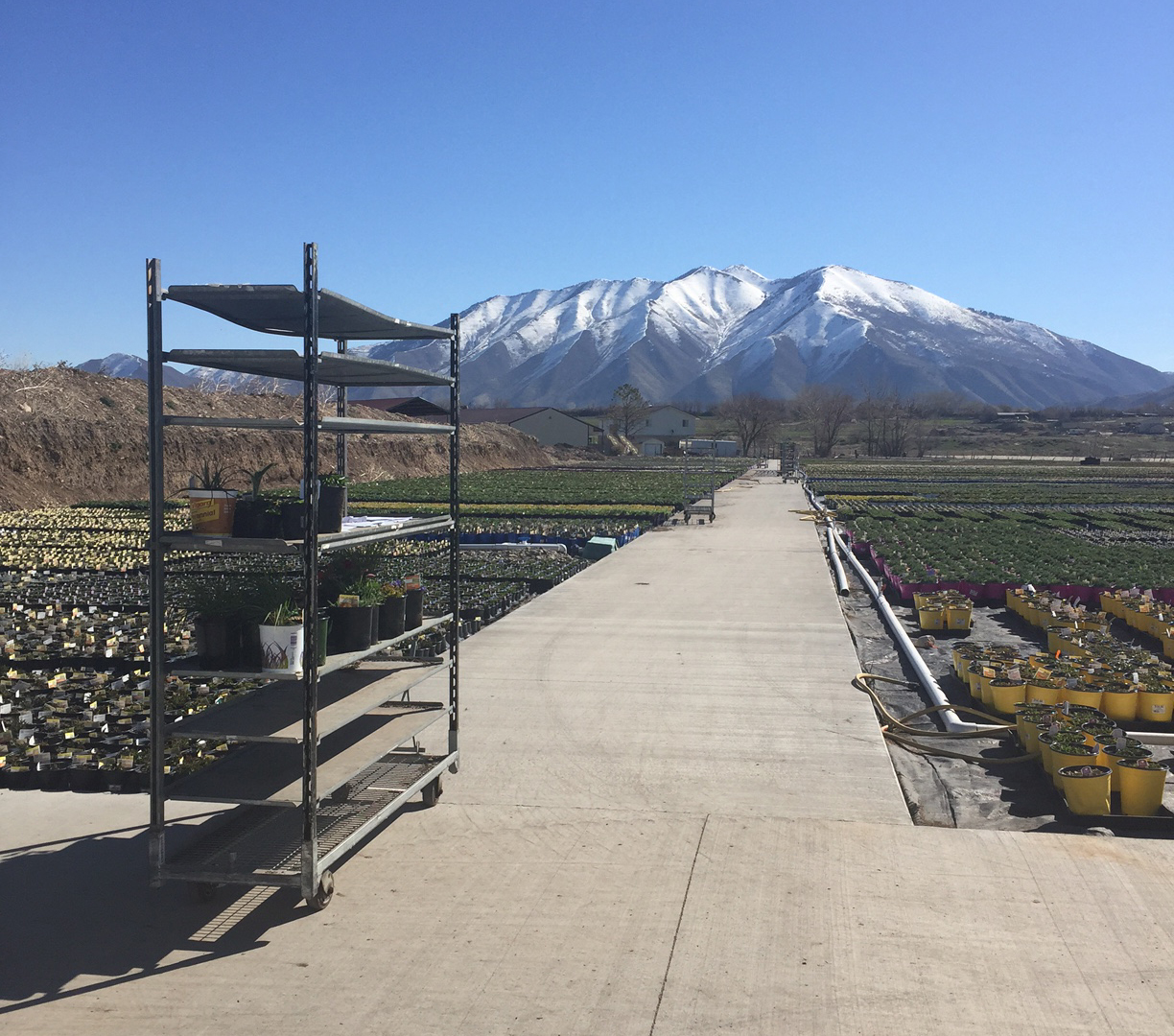 As we mentioned above, John and Jill Hoffman visited the Salem, Utah location of Olson's Greenhouse of Colorado to pick up plants for the ID competition. Huge thanks to Olson's for providing the plant material and to Matt Carr for pulling the plants.