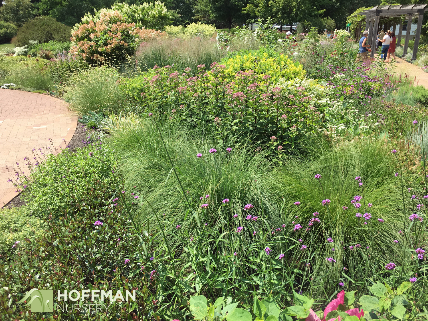 Sporobolus heterolepis in the foreground thrives in this perennial planting at Noerenberg Memorial Gardens.