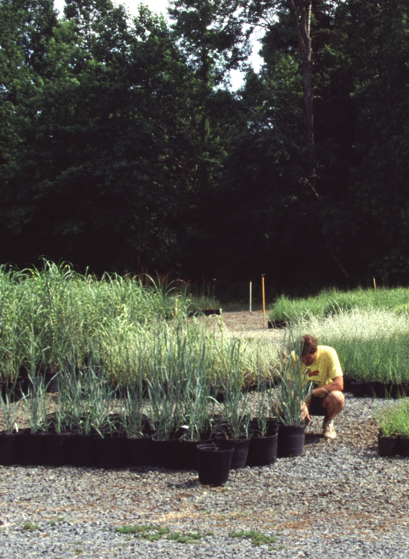 John Hoffman early in his grass-growing career. He and Jill began with finished sizes but chose to focus on liners as the nursery expanded.