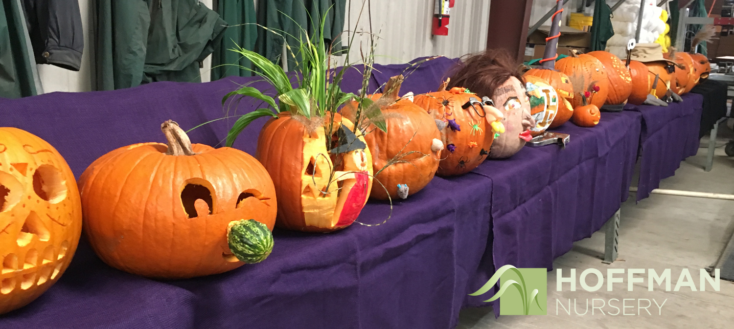 The competition was tough, and we had a amazing variety of Jack-o-lanterns.