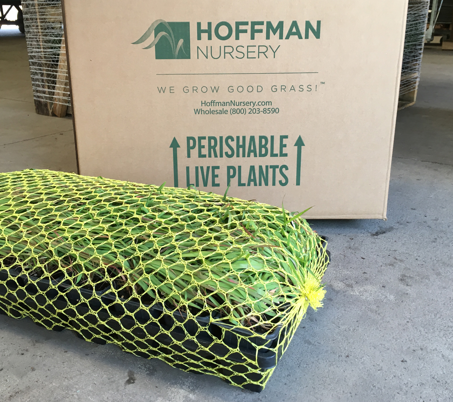 With boxed shipments, plant trays are wrapped in breathable netting to hold the plants securely.