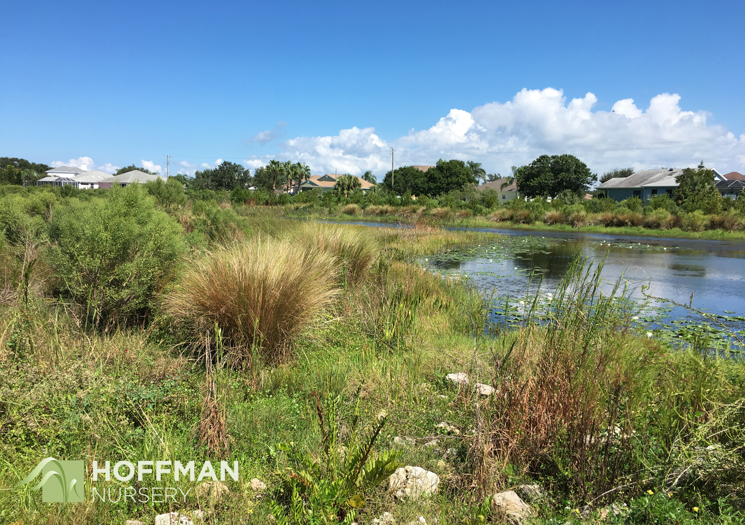 The preserve includes several coastal habitats, and Cord Grass (Spartina bakeri) makes it home throughout the site.