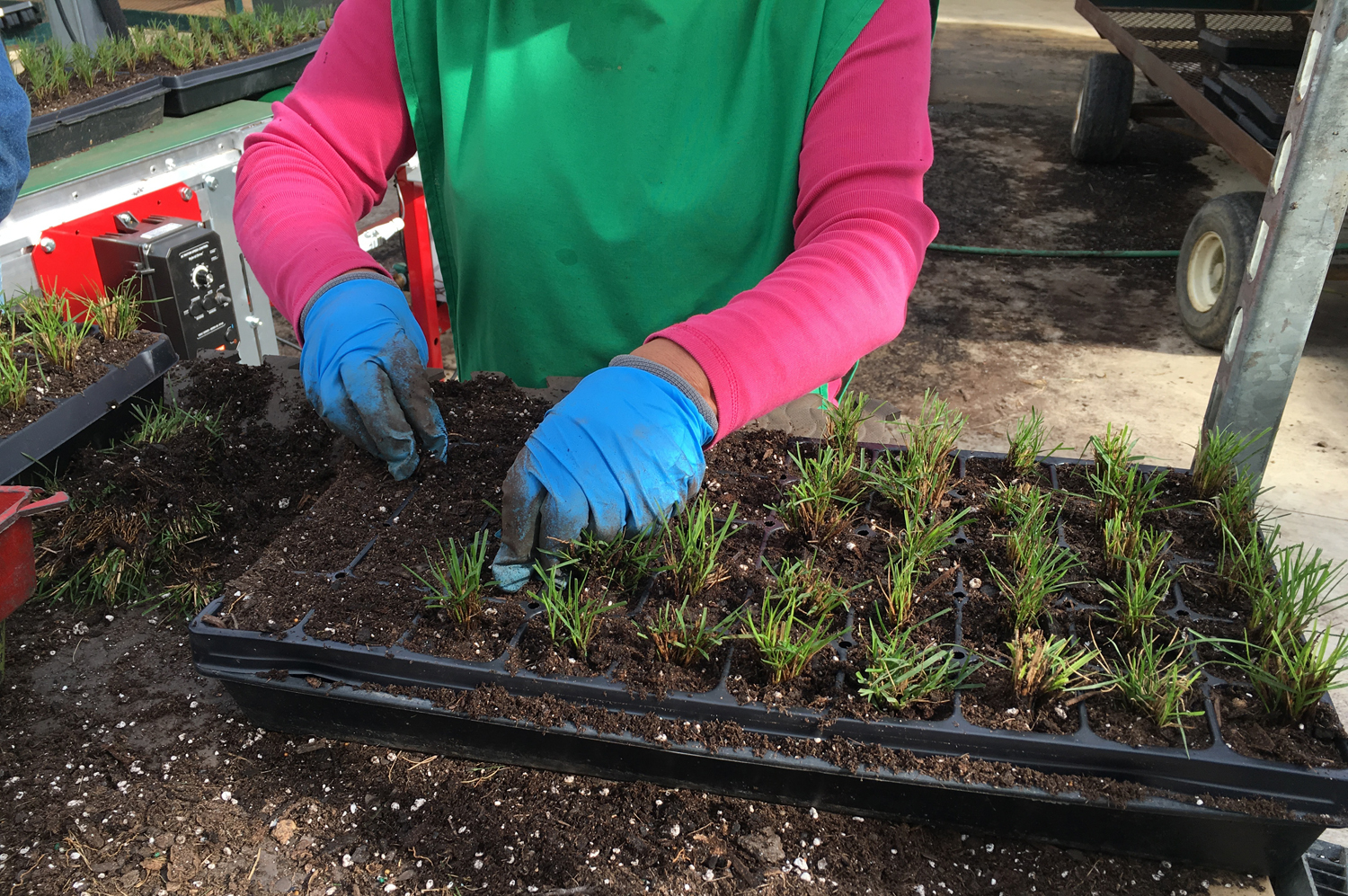 Hoffman Nursery Manager Scott Epps Talks About Preventing Disease During The Propagation Process Learn What Does To Get Ahead Of