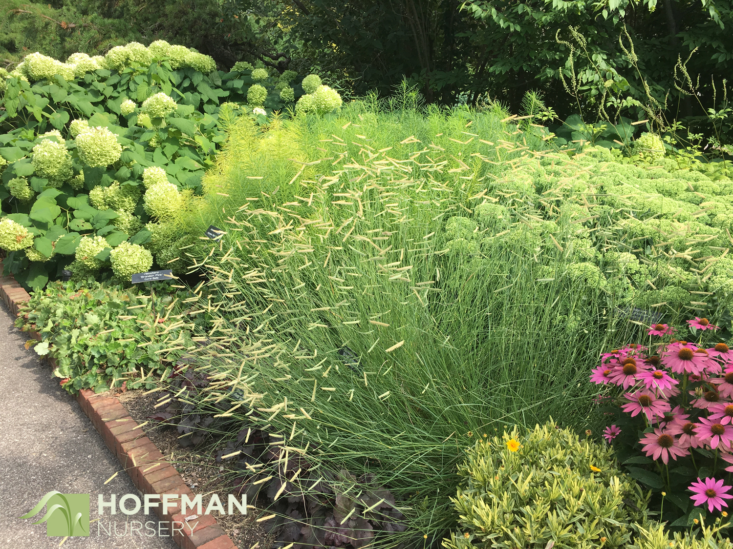 The Perennial Garden at the Arboretum was a treasure trove of plants. We really like they way they used grasses!