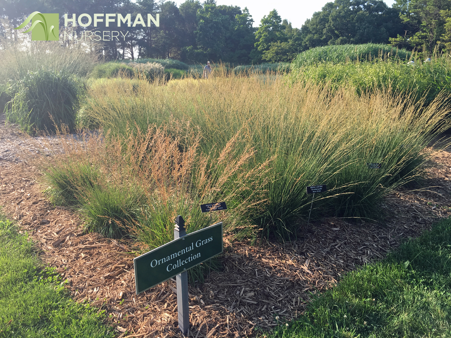 The Minnesota Landscape Arboretum's Ornamental Grass Collection send shivers through grass admirers.