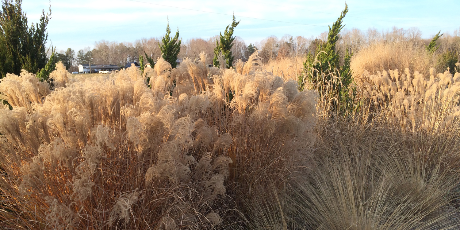 Grasses in this border garden bring beauty to the winter landscape.