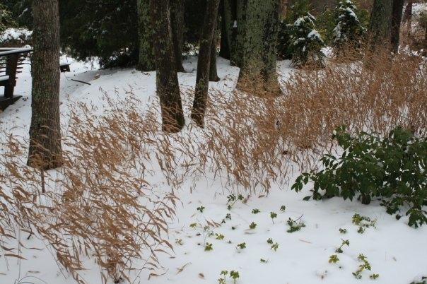 River Oats in snow