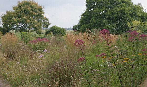 Planting composition in Piet Oudolf's garden