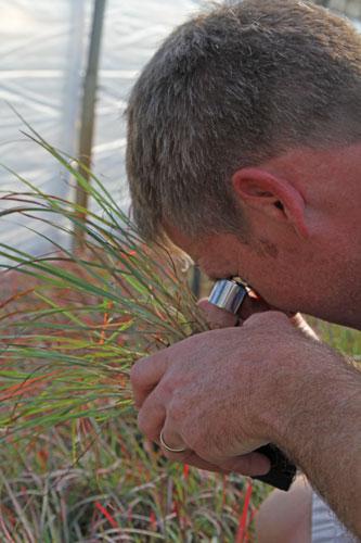 Scott Epps examining grasses