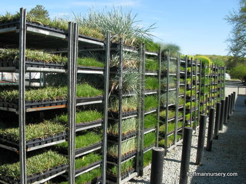HNI grasses waiting for shipment