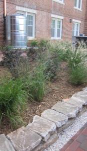 Rain garden at NCSU