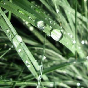 Carex 'Blue Zinger' on Instagram