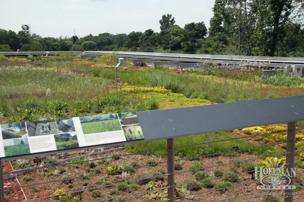 Roof garden and interpretive signs in 2013