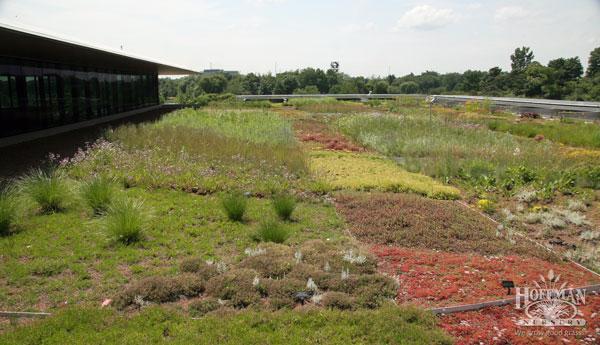 The garden in 2013, when John Hoffman visited.