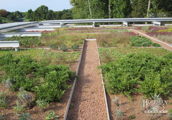 Pathways traverse the roof gardens, allowing for viewing and evaluation. Photo taken just after installation in Fall 2009.