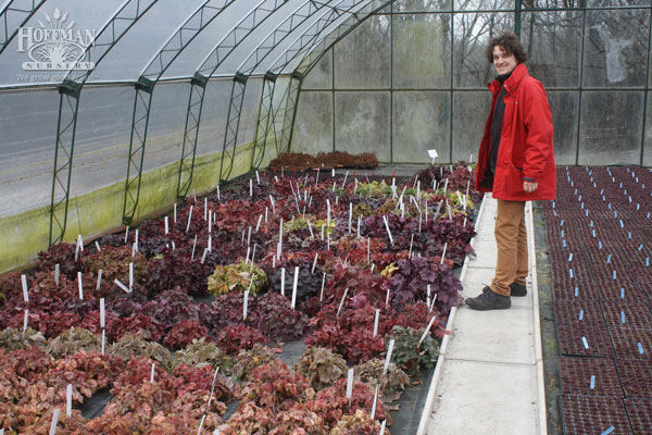 Olek Michalik with Heuchera