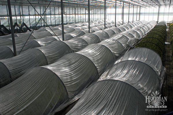 EverColor plants under row covers
