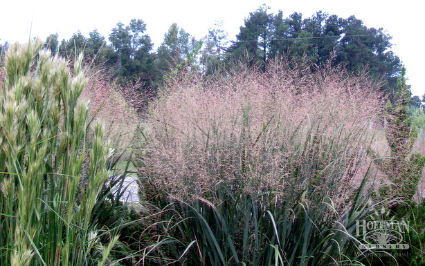 Bushy Bluestem and Switchgrass bring many nooks and crannies to host butterflies.