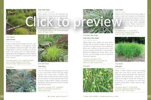 Plant Descriptions
