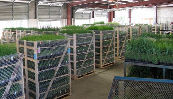 Racks full of grasses ready to ship