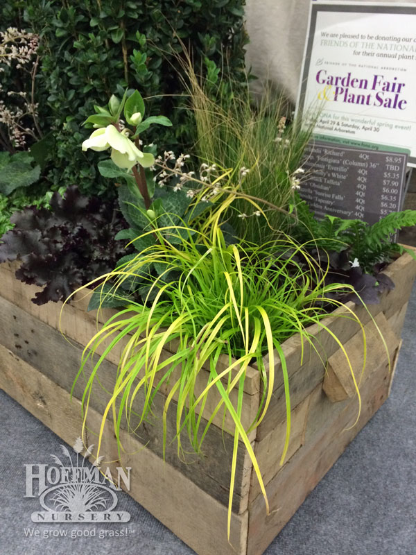 Carex Everillo at Saunders Brothers